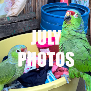 JULY photos