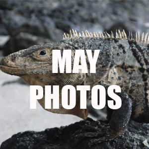May photos