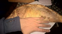 My calzone pizza -literally the size of my forearm