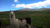 A llama and a volcano